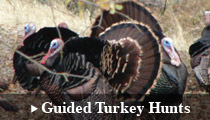 Guided Turkey Hunting
